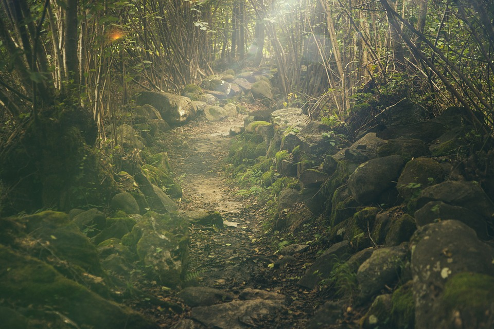 forest-438432_960_720
